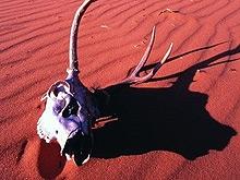 Область становится пустыней: миф или реальность?