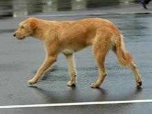 Созвездие мифических псов