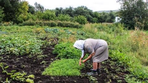 «Ленивые» и «мнимые»: законы против бедности могут загнать в могилу тысячи саратовцев