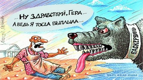 Хроника собачьей жизни