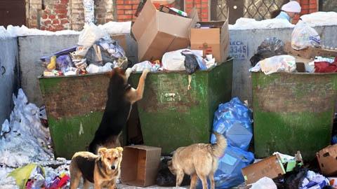 «Грязь, пыль, мусорные баки переполнены»