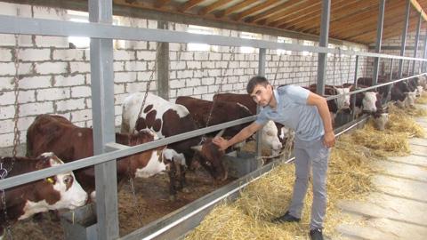 Новая ферма  в ровенской степи