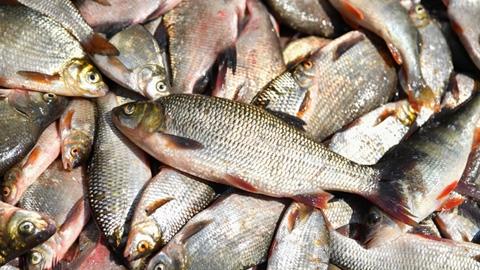 Радаев поймал рыбу, Исаев поднял гирю