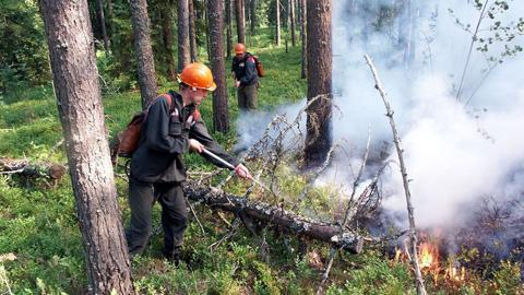 Есть такая профессия - лесу служить