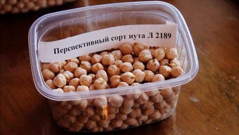 Краснокутская селекционная опытная станция