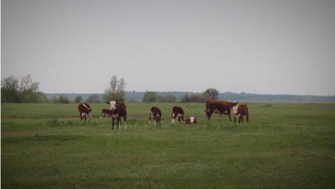 В Балаковском районе завершаются весенние полевые работы. Одни из лучших результатов — в коллективе Валентины Анохиной