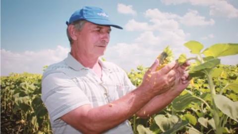 Завод растительных масел Новохоперское: работа на перспективу