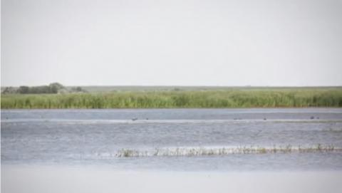 Лебедевское водохранилище: влаги хватит