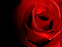 Слова-розы и слова-жабы