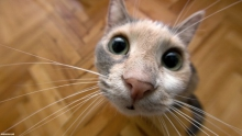 Кошка, живущая в сердце