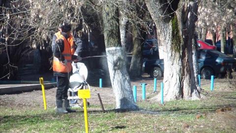 В Саратове чем-то и зачем-то побелили 8 тысяч деревьев