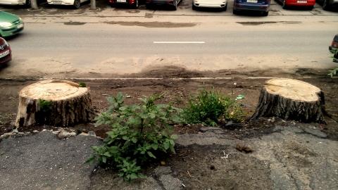 В Саратове уничтожат больше тысячи деревьев, и это только начало