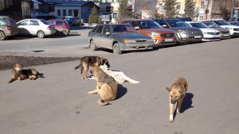 Борьба с колой, бездомными собаками и мусорными площадками