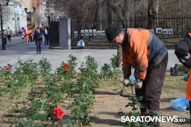 Корольков сад розы купить саратов комнатные цветы купить в анапе