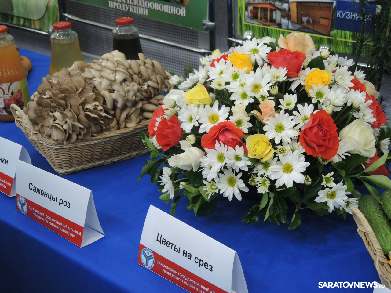 Выставка перед десятым заседанием Саратовской областной думы