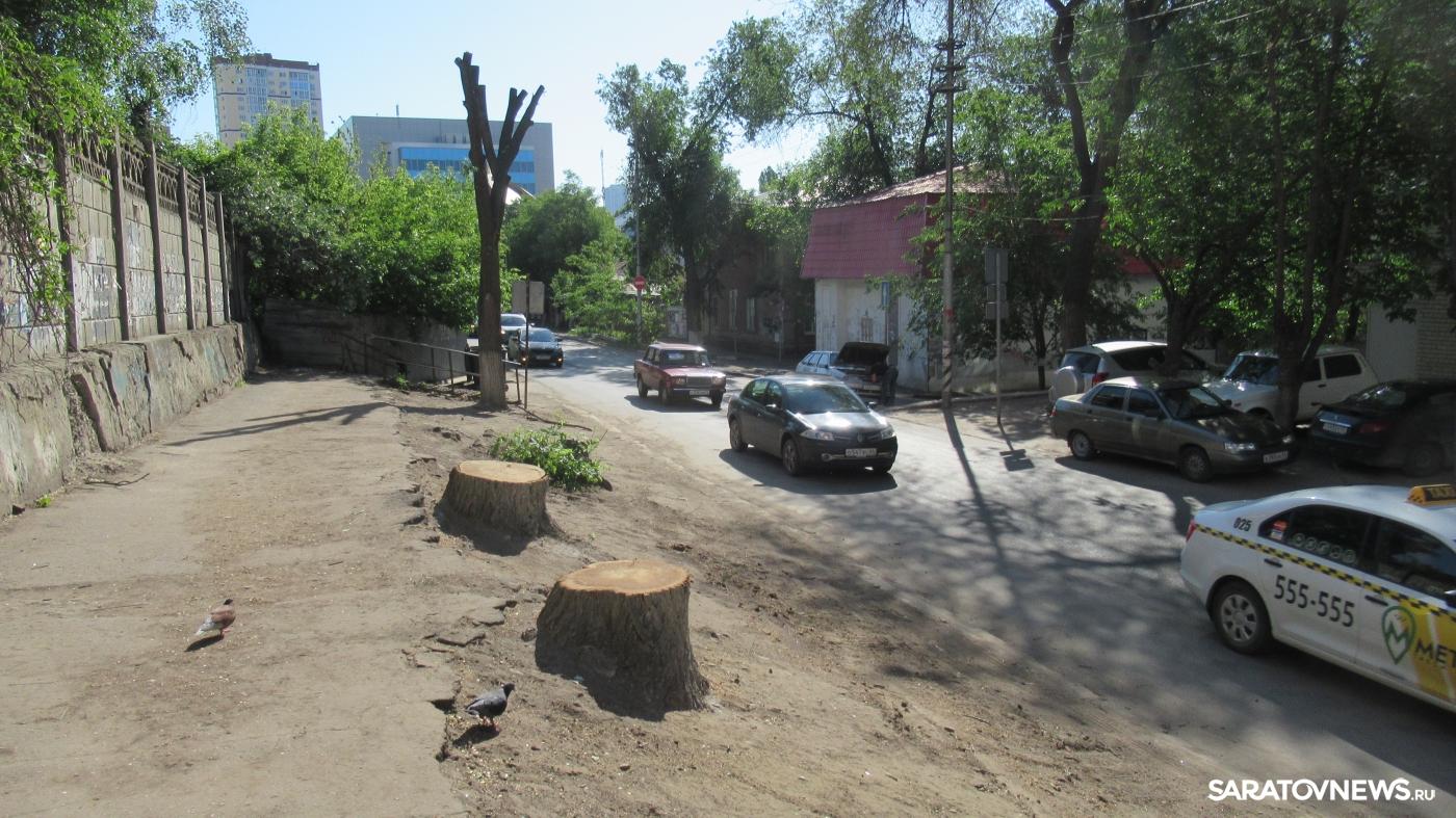 В городе снова активизировалось массовое уничтожение деревьев