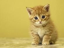 Котенок съел половые органы своего хозяина
