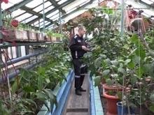 Саратовский заключенный выращивает гибрид грейпфрута и лимона