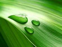 Оппозиционеры призывают добывать энергию из растений