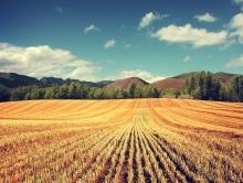 Площадь посева зерна и бобовых в Саратовской области увеличат