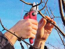 В Энгельсе погиб обрезавший ветки дерева мужчина
