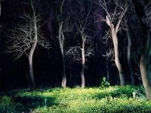 Бабич предложил защитить леса ПФО повышением статуса лесничих