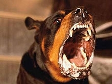 Из-за бешеной собаки в Ровенском районе установлен карантин