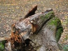 Покровчанин умер после падения на пень