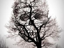 На дереве на Воскресенском кладбище найден человеческий скелет