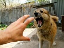 В Саратове обнаружена бешеная собака