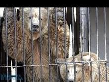 Саратовцы открыли в Пензе уникальный зоопарк