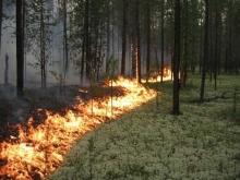В шести районах Саратовской области установлен чрезвычайный класс пожарной опасности