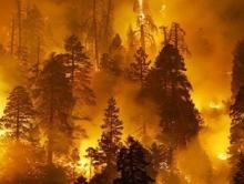 В Саратовской области сгорели 14,5 га сосняка