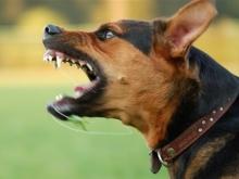 Собака искусала маленькому ребенку голову и спину