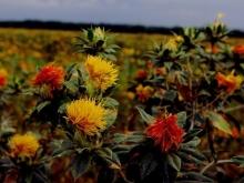 Балаковские фермеры подготовили свой ответ на санкции Запада