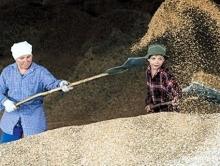 Валерий Радаев предложил отправлять больше саратовского зерна на экспорт