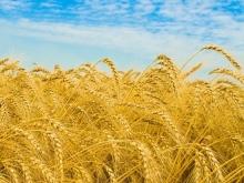 Хлеборобы намолотили 3,5 млн тонн зерна и засеяли свыше 900 га озимыми