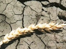 Министр отчитался о темпах гибели урожая в области