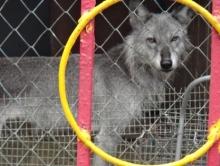 Москвичка требует закрыть аткарский зоопарк