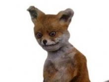 В Аткарском районе ввели карантин из-за бешеной лисицы