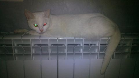 В Саратове тепло получили уже 23 жилых дома