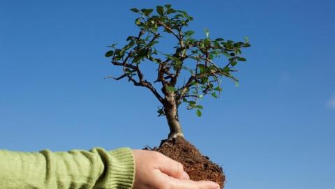 В Саратове высажены деревья и цветы на 1,2 миллиарда рублей
