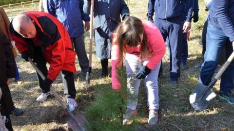 Александр Буренин сажал деревья в сквере Марины Расковой