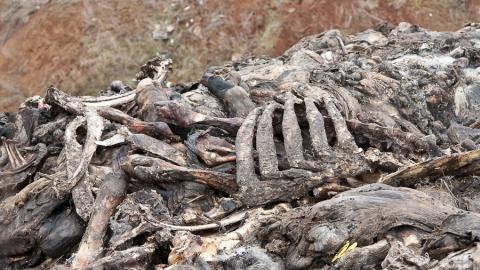 В Балашове убийцы прятали труп жертвы в скотомогильнике