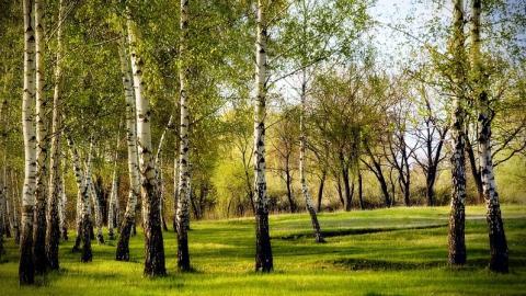 У Саратовской области - новый природоохранный куратор