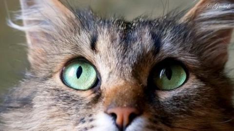 Саратовцам предлагают разгрузить карманы от мелочи в помощь животным