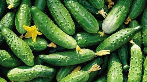 На известности саратовского овощного бренда паразитируют конкуренты