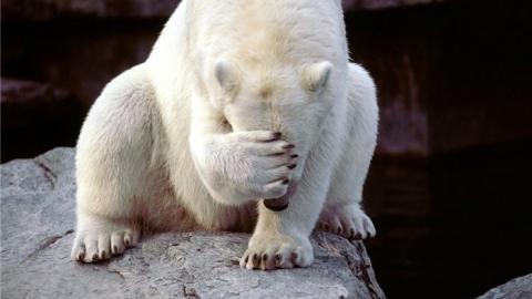 """Добычей медвежатника стали пиво """"Белый медведь"""" и водка """"Медвежий улов"""""""