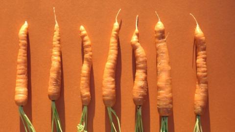 Лидером роста цен последней недели стала морковь