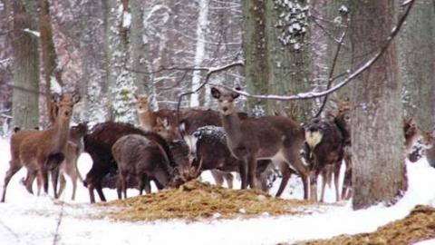 Саратовских чиновников обязали разработать схему охотничьих угодий